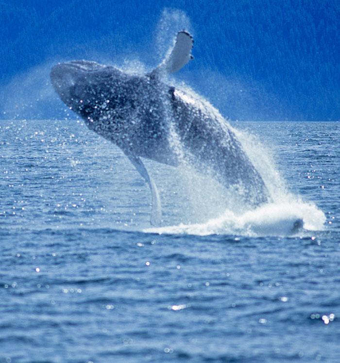 Santa Barbara Whale Watching