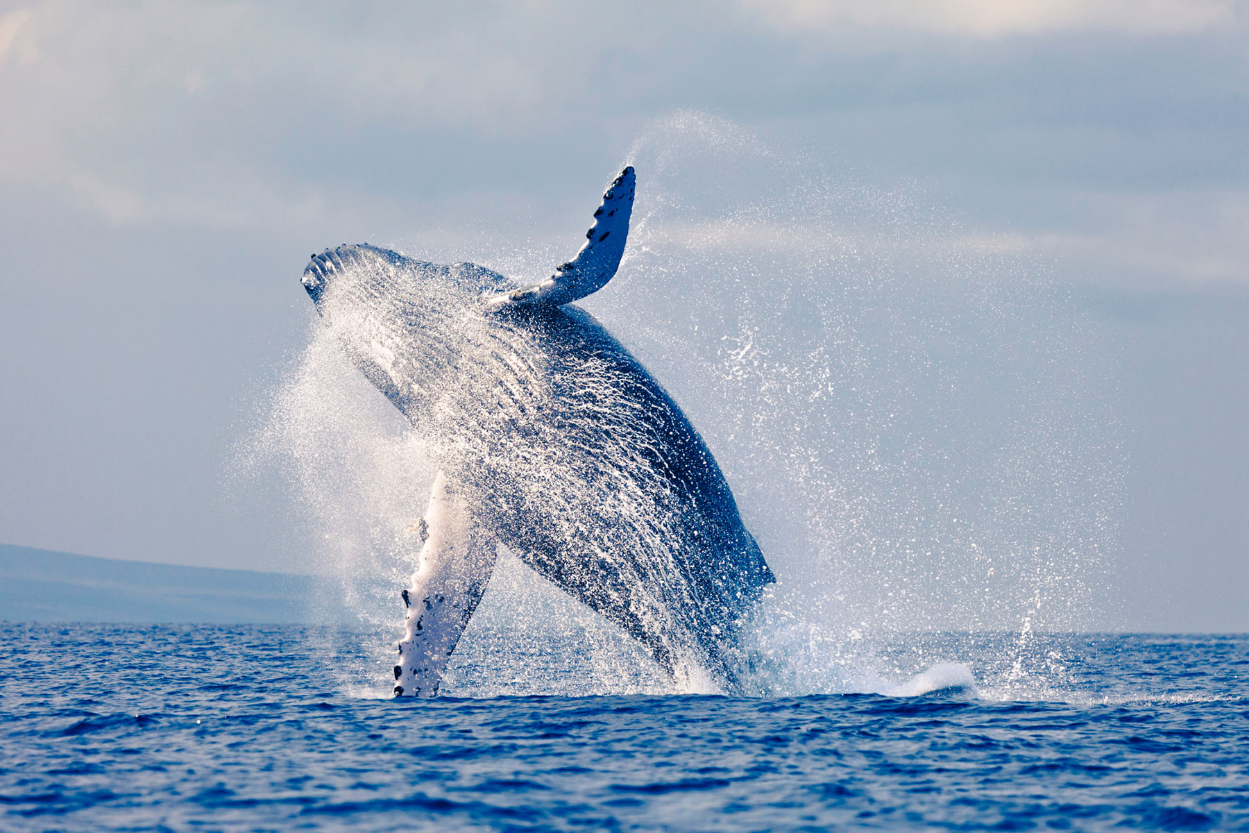 Santa Barbara Whale Watching Package