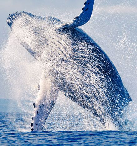 Whale Watching Package at California Hotel