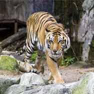 Santa Barbara Zoo at California